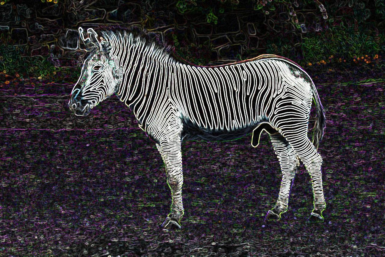 site de rencontre zebres)